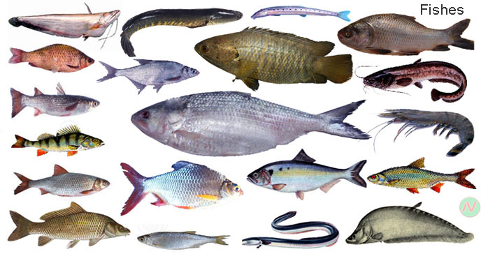 Names of Fish Fishes Names in English