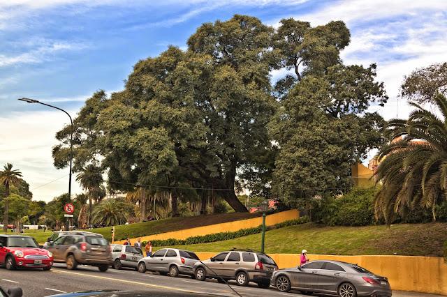 Ärboles y autos estacionados en Recoleta.