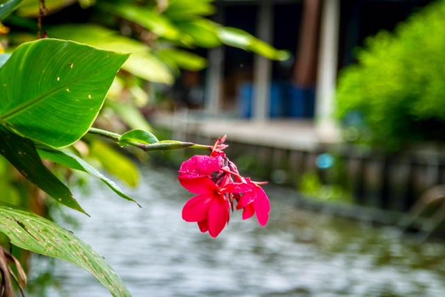 Nature Wonders in Floating Market, Bangkok
