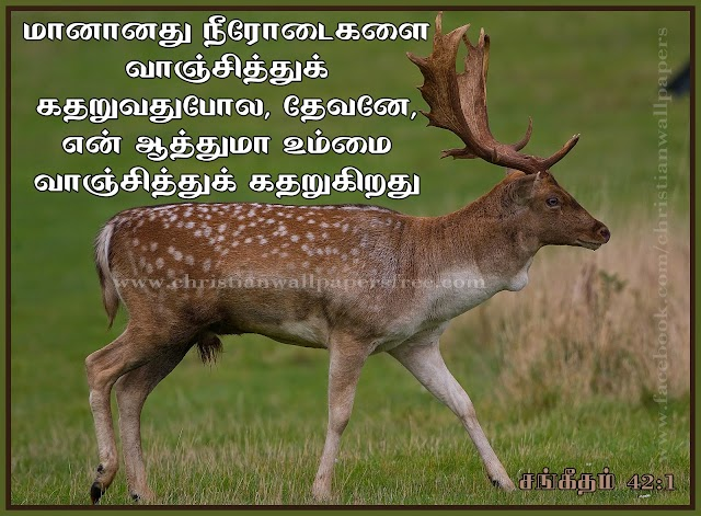 HD Tamil Christian Bible Verse Wallpapers Free Download