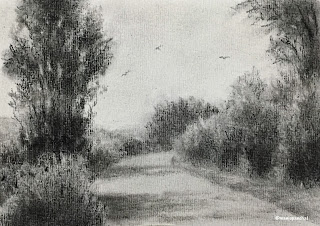 Charcoal drawing of a forest scene on Strathmore drawing paper