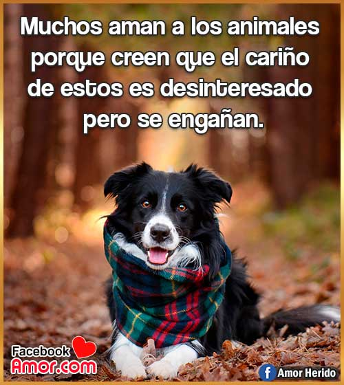 frases lindas sobre animales