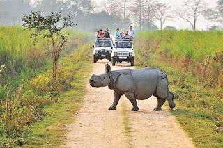 Kaziranga National Park Safari