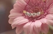 Aku Jatuh Cinta
