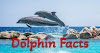 [100+] Amazing Facts About Dolphin In Hindi