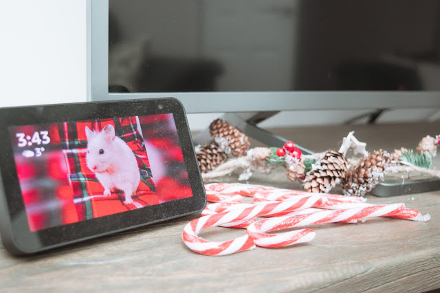 Amazon Echo and Candy canes