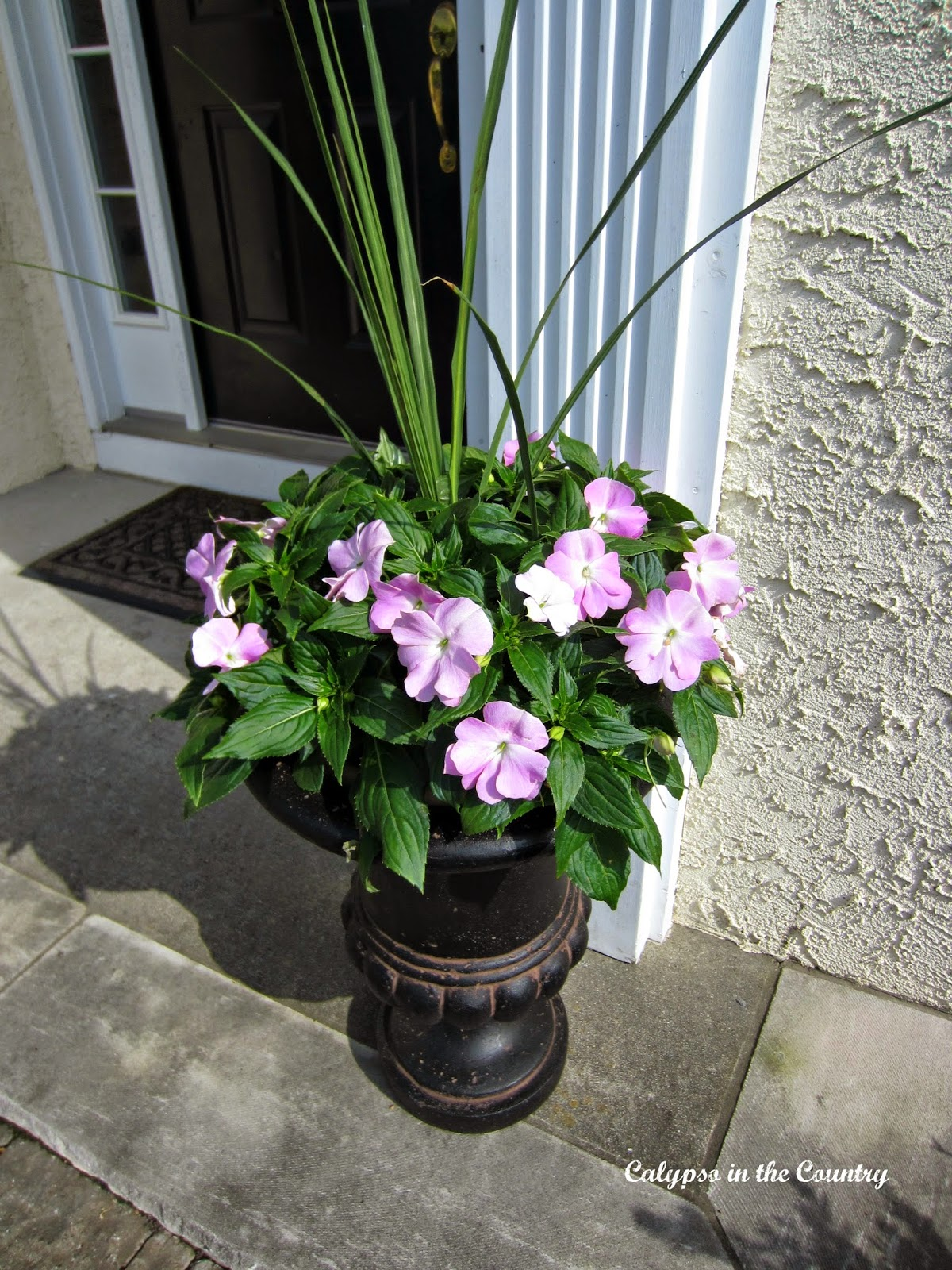 Potted Plants for Spring