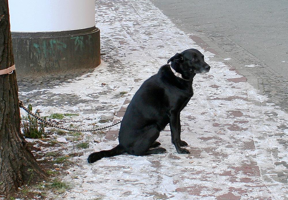 Menschen Für Tiere E.V.: Hunde Im Winter Vor