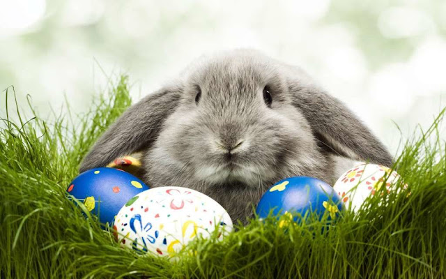 Happy Easter Memes Pics Images Pictures HD Wallpapers Collection