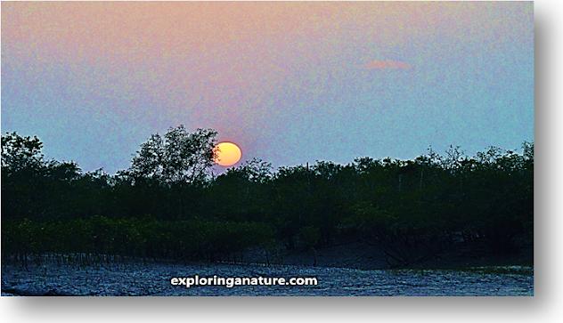 Sunset view at Sundarban National Park