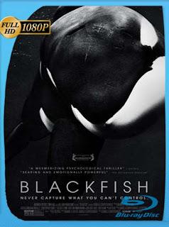 Blackfish (2013)HD [1080p] Latino [GoogleDrive] SilvestreHD