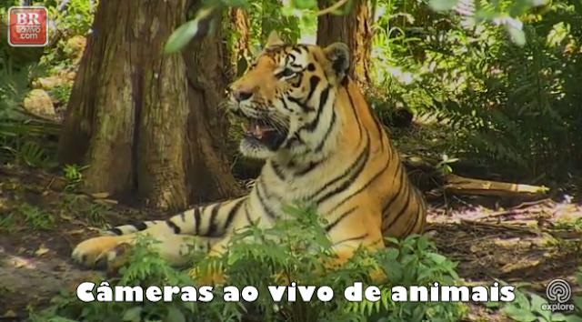 câmeras ao vivo de animais