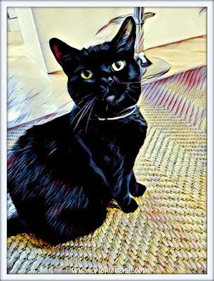 Panfur Parsley's Epic Selfie  Puzzle black cat house panther