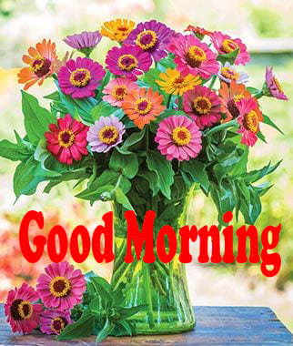 Zinnia Flowers Good Morning