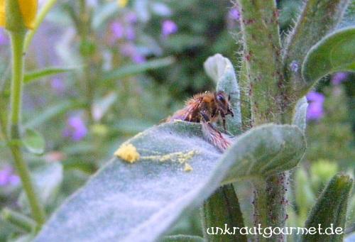 Mühsal der Biene