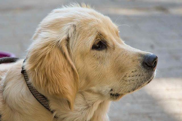Female dog names starting with g letter