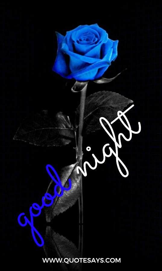 Good Night Blue Rose Flower