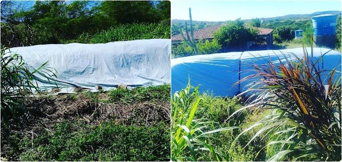 Prefeitura de Amparo, EMPAER e PROCASE realizam dia de campo para produção de silagem