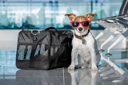 Правила ввоза и вывоза животных в Таиланде — 2020 год — Popular Posts