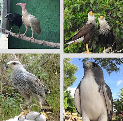 Fotos divulgação do Parque dos Falcões - Matéria Parque dos Falcões - BLOG LUGARES DE MEMÓRIA