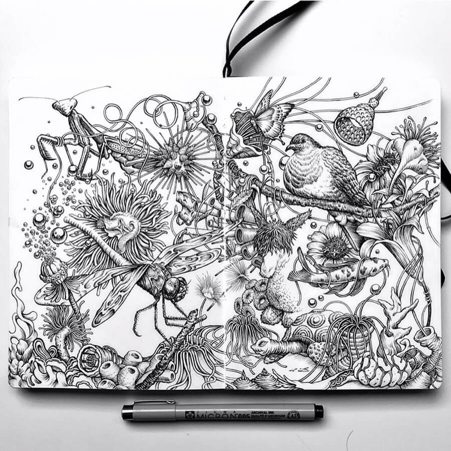 03-A-day-in-nature-1-Tim-Ingle-Nature-Drawings-www-designstack-co