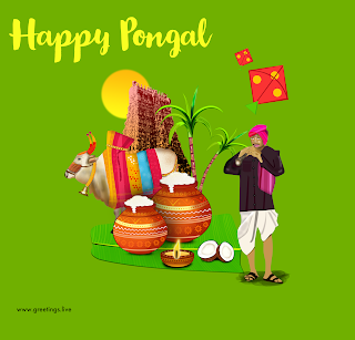 Happy Pongal greetings Sun rises temple gopuram kites flying and decorated cow sugar canes and Pongal pots and a man performing music