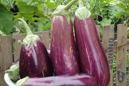 These are the benefits of eggplant and how to process it