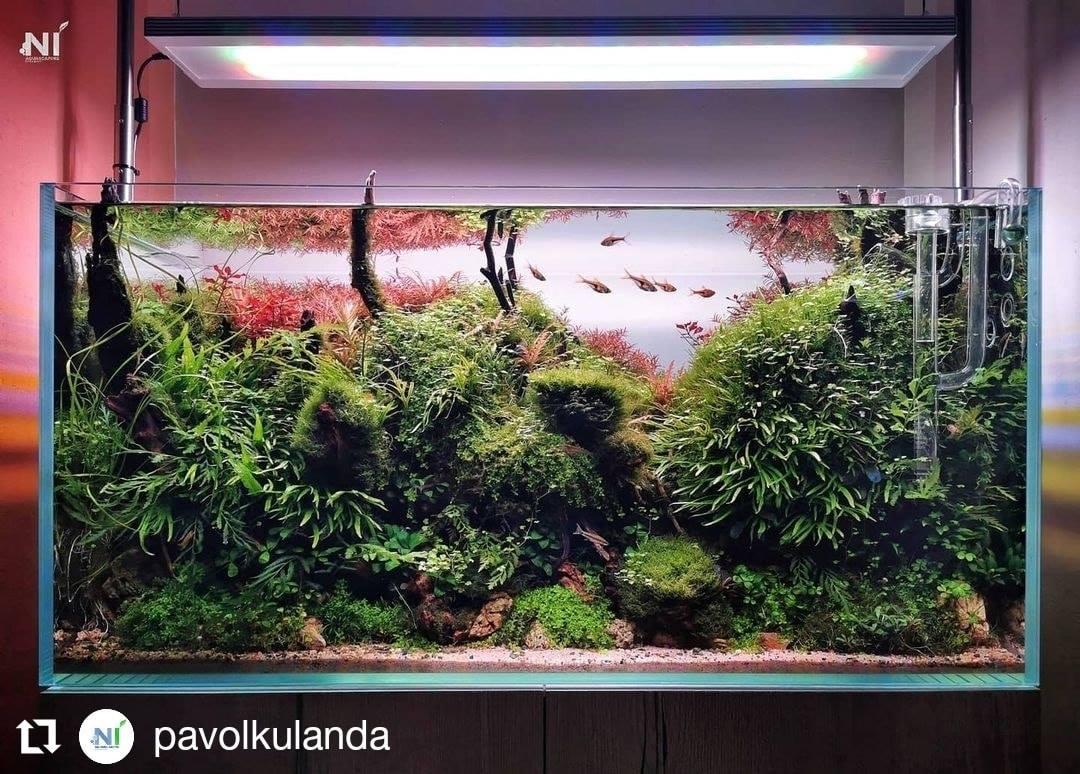 Dương xỉ lá kim mini tuyệt đẹp trong hồ thủy sinh của Pavol Kuľanda