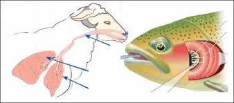 التنفس ضرورة حيوية عند الحيوانات