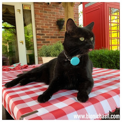 Black Cat Appreciation Day 2020 with Parsley Sauce ©BionicBasil® Raspberry Blowing Cat