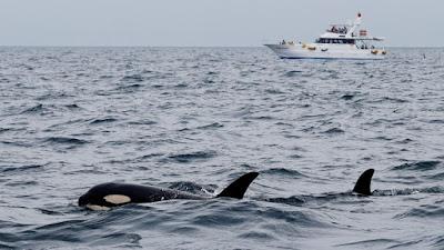 حيتان تهجم على مركب وسط البحر وتحاول إغراقة