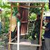 Tingkatkan Sanitasi Yang Berkualitas, Koramil Ilung Bangun Jamban Untuk Warga