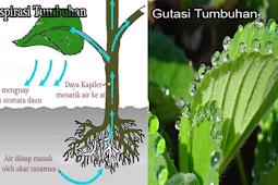 Pengertian, Proses dan Perbedaan Transpirasi dan Gutasi Pada Tumbuhan Lengkap