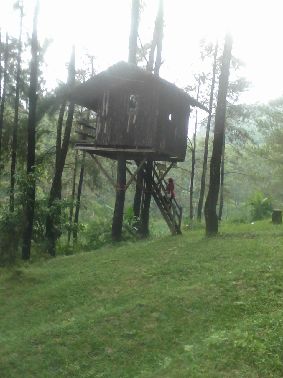 Rumah Pohon Taman Dayu : rumah, pohon, taman, Rumah, Pohon, Taman, Pasuruan, Timur:, Liburan