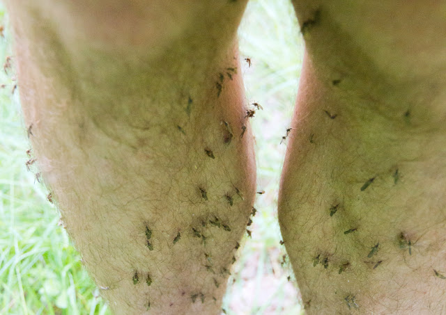 This Is Why Mosquitos Prefer To Bite Some Humans and Leave Others Alone