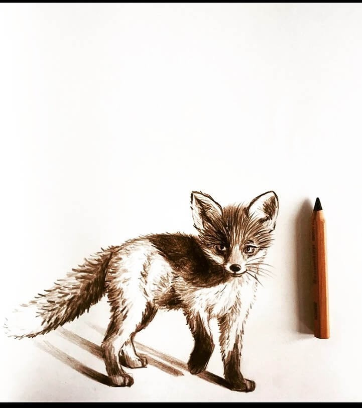 09-Cautious-fox-Farbe-Und-Fabeln-www-designstack-co
