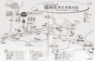 彼岸花群生地案内図