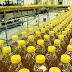 Страшна правда про соняшникову олію. Вразливим не читати!