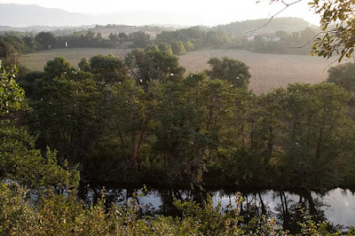 Bosc de ribera al Ter