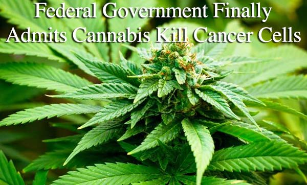 The US Finally Admits Cannabis Kills Cancer Cells