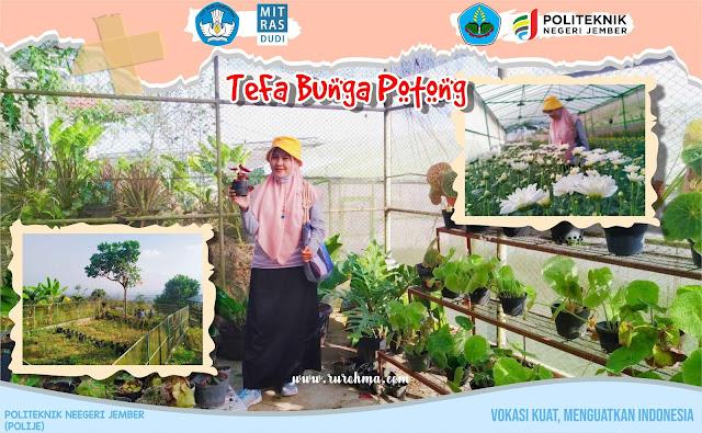 TeFa Bunga Potong Polije
