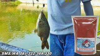 Umpan Ikan Mas Tombro Khusus Di Kolam