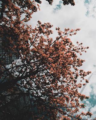Beautiful Dark Orange Flower With Sky Free Stock Image