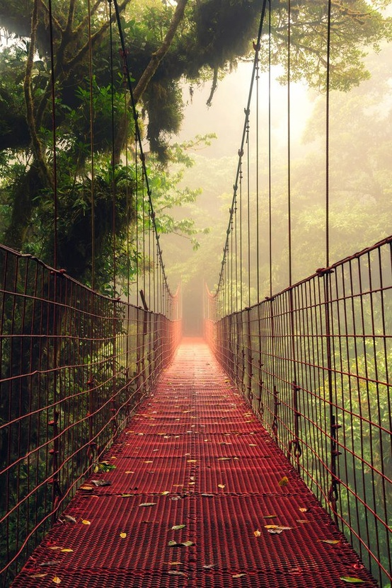 Cute Wallpapers For Lockers Fog Bridge Costa Rica A1 Pictures