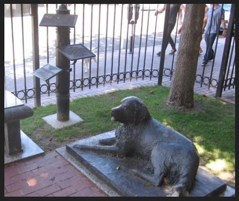 City of San Diego dog laws