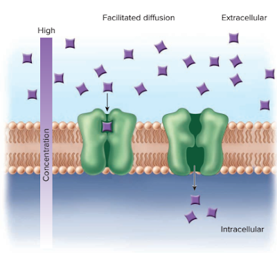 difusi senyawa polar, difusi glukosa, difusi sodium, proses difusi, Transport pasif : Difusi, osmosis dan difusi terfasilitasi