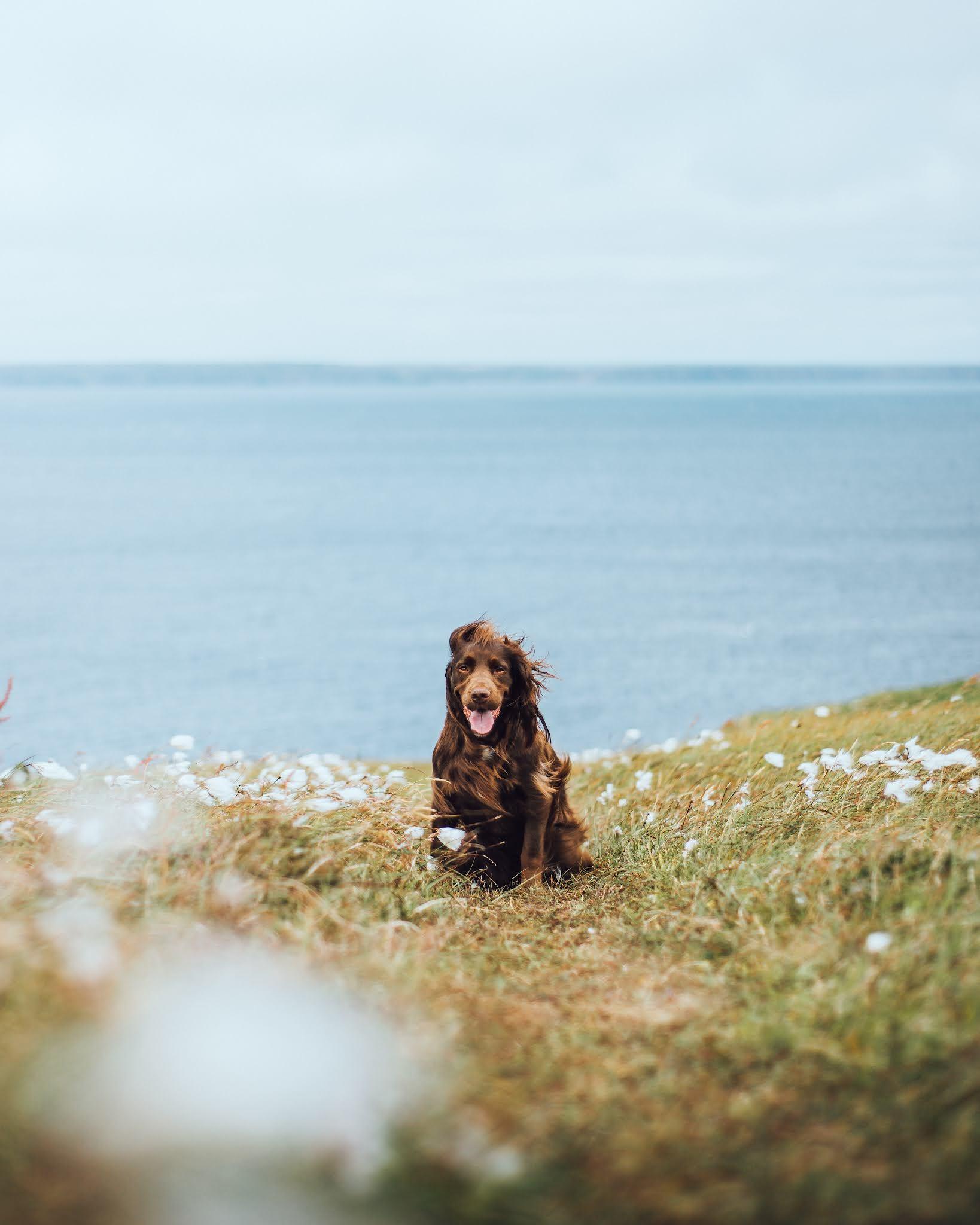 Tilly at Tiumpan Head Lighthouse, Outer Hebrides liquid grain