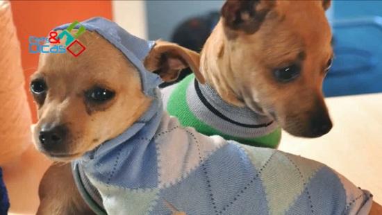 Cachorros pequenos usando rooupas feitas de meias
