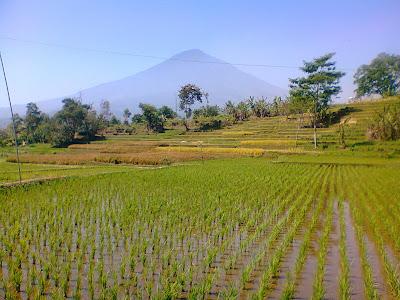 Pesona Gunung Cikuray Indonesia