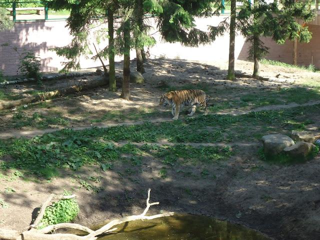 Zoos in Brandenburg Zoo Eberswalde - 1